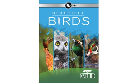 NATURE: Beautiful Birds DVD 78ad219e-732e-4f98-99c4-bd7839d9419c