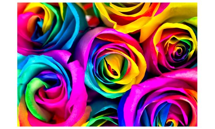 Fresh Cut Rainbow Roses 50cm 50 Stems