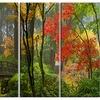 Japanese Wooden Bridge in Fall - Photo Metal Wall Art