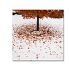 Kurt Shaffer Maple Leaves in the Snow Canvas Print