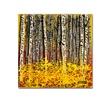 Roderick Stevens Fall Aspens Canvas Print