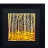 Roderick Stevens 'Fall Aspens' Matted Black Framed Art