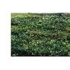 Kurt Shaffer 'Daffodil Hill II' Canvas Art