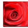Miguel Paredes, Cadmium Red II Canvas Print 24 x 24