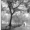 Poet's Walk, Central Park, New York City by Henri Silberman