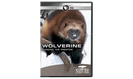 NATURE: Wolverine: Chasing the Phantom DVD 37a37b4d-6a5a-445a-a34e-e0f69fb461d2