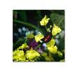 Kurt Shaffer Doris Longwing Butterfly on Orchid Canvas Print