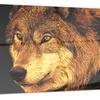 Eyes of a Predator- Animal Metal Wall Art 28x12