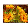 Mandy Budan 'Four Sunflowers' Canvas Art