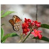 Patty Tuggle 'Butterfly on Red Flowers' Canvas Art