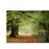 Philippe Sainte-Laudy 'Through the Woods' Canvas Art
