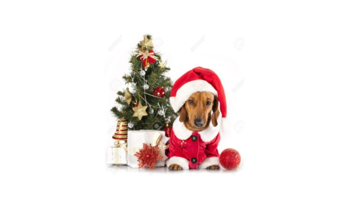 cf3793e3a Outward Hound Dog Costumes Collars Santa Hat Holiday Leashes Accessory