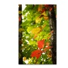 Philippe Sainte-Laudy 'Oak Leaves' Canvas Art