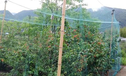 iMounTEK 13' x 33' Anti-Bird Garden Netting
