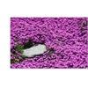 Kurt Shaffer 'Island in Purple' Canvas Art