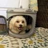 Deluxe Retreat Foldable Pet House