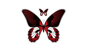 "6"" x 8"" Decal Red Butterfly"