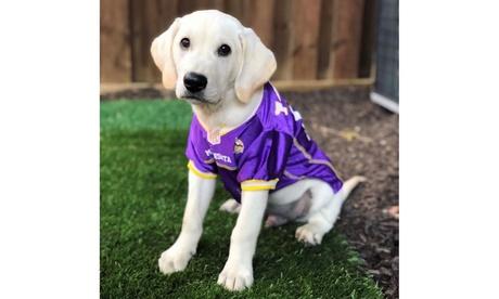 NFL Pet Jersey (NFC)