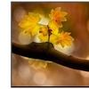 In Autumn 2 by Ursula Abresch