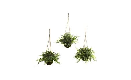 Eucalyptus, Maiden Hair & Berry Hanging Basket - Set of 3 54188b1b-a016-4506-afe4-cd7eeaa13136