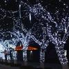 Weatherproof 100 LED Long Solar String Lights Yard Lights For Outdoor Decor