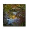 Kurt Shaffer 'Why I Love Autumn 3' Canvas Art