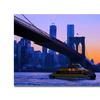 MCat NYC Canvas Print