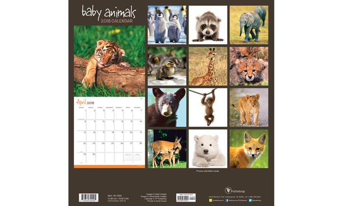 all the animals 2018 wall calendars 12x12 livingsocial