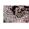 Kika Pierides 'Study for NA 4 (Wave)' Canvas Art