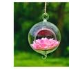 2pcs Round or Spherical Transparent Hanging Glass Vase