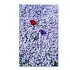 Kurt Shaffer 'One Red Tulip' Canvas Art