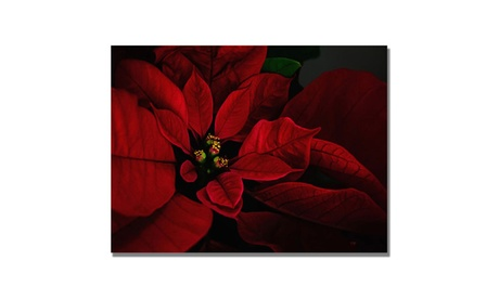 Lois Bryan 'Poinsettia' Canvas Art 741bb278-1c5a-4084-b6b3-4450722f3ae2
