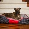 Freedom Luxury Lounge Pet Bed
