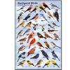Backyard Birds Educational Science Chart Poster