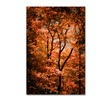 Philippe Sainte-Laudy 'Autumn Whispers' Canvas Art