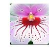 Kurt Shaffer 'Mother Natures Imagination Orchid' Canvas Art
