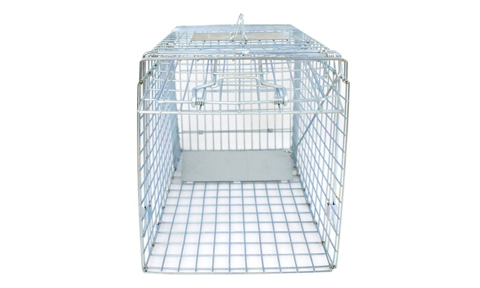 "Humane Small Live Animal Control Steel Trap Cage 32/""x12.5/""x12/"" Raccoon Skunk Cat"