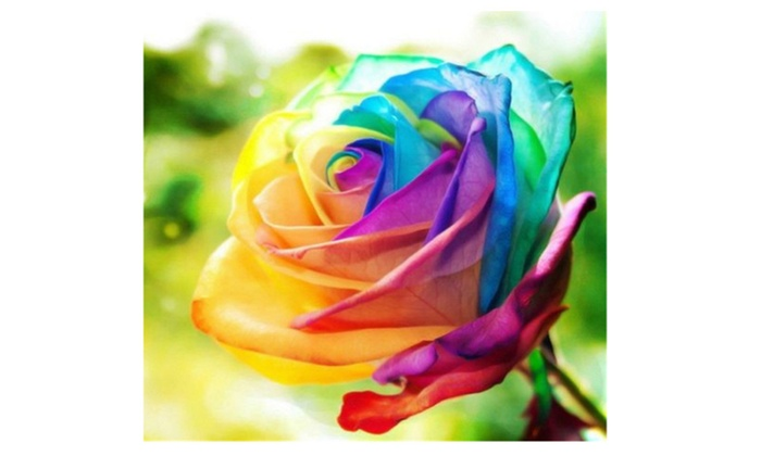Multi color 200pcs rainbow rose flower seeds garden yard for How to color roses rainbow