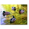 Amy Vangsgard Four Ducks on Pond Canvas Print