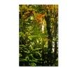 Philippe Sainte-Laudy 'Last Season Green' Canvas Art
