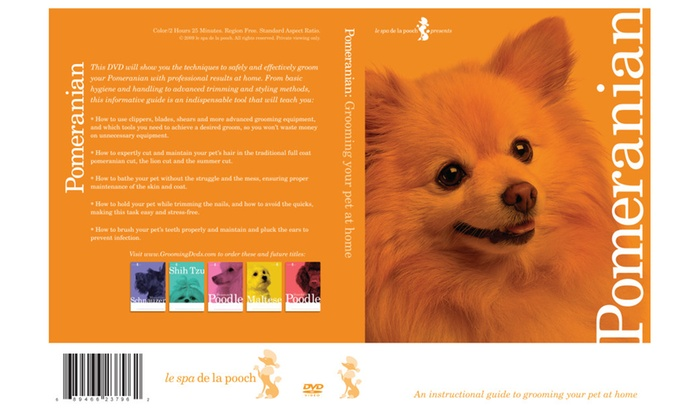 How To Groom Pomeranian Dog Grooming Video Groupon