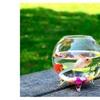 Fish Tank Round Desktop Goldfish Tank  as Vase and Fish Bowl
