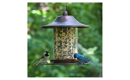 Bird Feeder Wild Wildlife Seed Feed Copper Panorama Outdoors Backyard (Goods Pet Supplies) photo