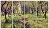 Blossom Apples Garden - Photography Canvas Art Print