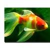Goldfish by Amy Vangsgard-  Canvas Print
