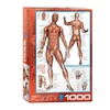 EuroGraphics Puzzles The Muscular System