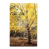 Philippe Sainte-Laudy 'Yellow Fall' Canvas Art