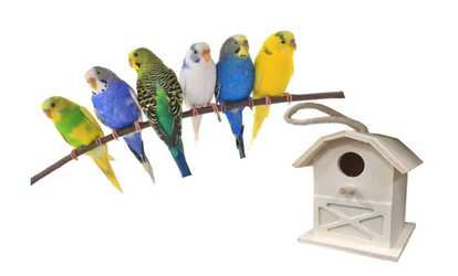 Discount Bird Toys : Bird supplies deals & coupons groupon