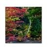 Kurt Shaffer 'All the Colors of October in Ohio' Canvas Art
