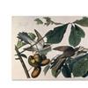 John James Audubon 'Yellow-Billed Cuckoo' Canvas Art